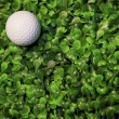 Golf ball on green grass field — Stock Photo