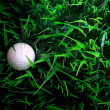 Golf ball on green grass with putter and driver — Stock Photo #19131921