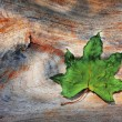 Green dry leaf on wood texture — Stock Photo