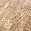 Pattern of tractor wheel printed on sand beach use as nature background - Stock Photo