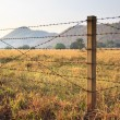 Barbed wire fence and grass field — Stock Photo