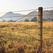 Barbed wire fence and grass field — Stock Photo #19654829