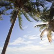 Coconut tree and sunny day — Stock Photo