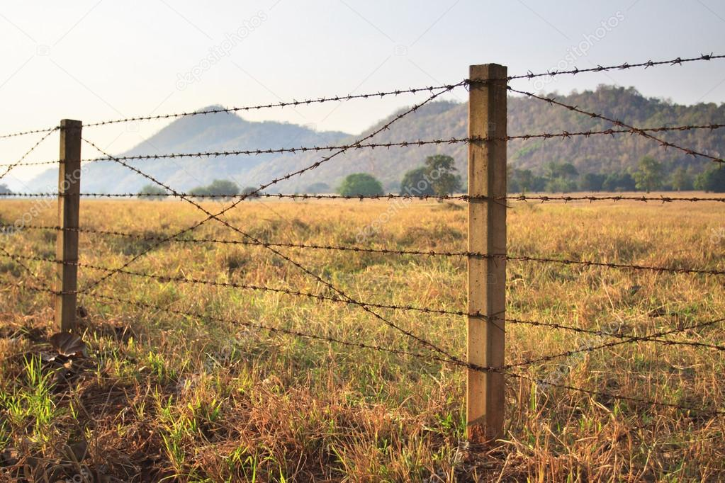 Barbed Wire Fence And Grass Field Stock Photo