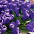 Purple tulip flowers arranged for decorated in house - Stock Photo