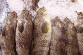 Fresh grouper fish in fresh market — Stock Photo