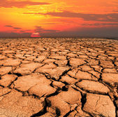 Dry and cracked land from natural disaster — Stock Photo