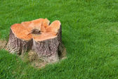 Stump tree plant on green field — Stock Photo