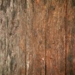 Stock Photo: Texture of bark wood use as natural background