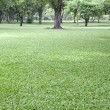 Green grass in public park use as natural background — Stock Photo