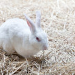 White rabbish on dry grass — Stock Photo