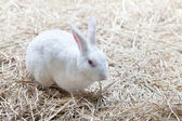 White rabbish on dry grass — Foto de Stock