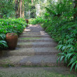 Walking way in green garden  — Foto de Stock