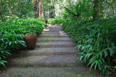 Walking way in green garden — Stock Photo