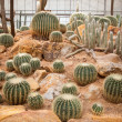 Cactus plant in green house use for multipurpose — Stock Photo #32792379