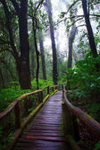 Hill evergreen forest of Doi Inthanon National Park — Stock Photo