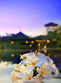 Close up of frangipani flower beside water pool with dusky sky in evening background — Stock Photo