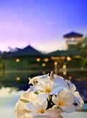 Frangipani blume neben warmwasserbecken mit düsteren himmel im hintergrund abend hautnah — Stockfoto