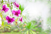 Pink purple orchid flower bouquet in green park with copy space — Stock Photo