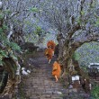 Stock Photo: Monks climb up stairs