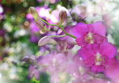 Pink purple orchid flower bouquet in green park — Stock Photo