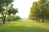 Morning light in public park with tree plant green grass field u — Stock Photo