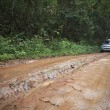 Stock Photo: Car in nature track off road in rain forest wilderness