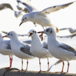 Sea gull birds standing on sea bridge — Stock Photo