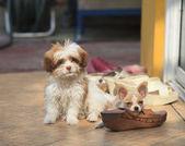 Köpek ve ayakkabı ayakkabı f zarar için sorunlu kullanım ısırma yaramazlık — Stok fotoğraf