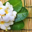 White frangipani flowers bouquet and green leaves with fresh wat — Stock Photo