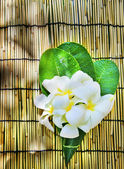 White frangipani flowers bouquet decorated in green leaves laying on bamboo wood mat with copy space — Stock Photo