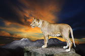 African lioness female standing on rock cliff against beautiful — Stock Photo