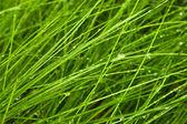 Jasne zielone trawy z wody spadnie — Zdjęcie stockowe