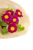 Primevère fleur de printemps dans le chapeau de paille — Photo