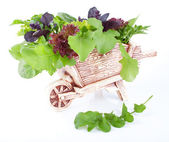 Decorative cart with the healthy greens — Stock Photo