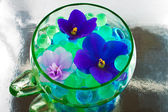 African violet flowers in the hydrogel — Stock Photo