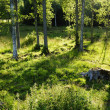 Forest in a sun day -  