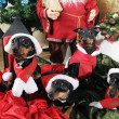 Miniture pinchers with christmas greetings - Stock Photo