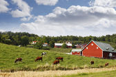 Small red farm houses — Stock Photo