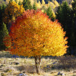 Autumn leaves, trees and colors — Stockfoto