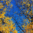 Autumn leaves against a blue sky — Photo