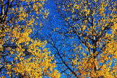 Autumn leaves against a blue sky — Stock Photo