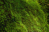 Closeup Stone overgrown with moss — Stock Photo