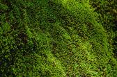 Closeup Stone overgrown with moss — Stock Photo
