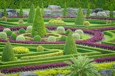Ornamental Plants Tree Tropical Landscape in Nature Garden — Stock Photo