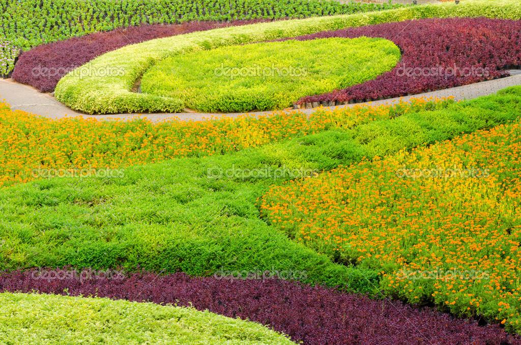 Belles plantes ornementales arbres fleurs et paysage for Arbres plantes fleurs
