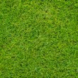 Colseup Beautiful green grass pattern from golf course — Stock Photo #34792849