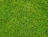 Colseup Beautiful green grass pattern from golf course — Stockfoto