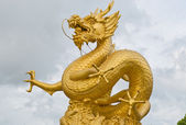 Gold dragon — Stock Photo