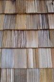Cedar wood — Fotografia Stock